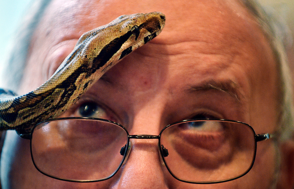 """Michael Shinn, of Hilton Head Island, glances at a Colombian red tail boa that is finding it's way across his forehead while at The Coastal Discovery Museum with his granddaughter Katherine Ford, not pictured, during a casual """"Meet and Greet"""" hosted by the Coastal Discovery Museum and """"Lowcountry Critters with Joe Maffo"""" on December 29, 2014.  tyulk """"Eeeek"""""""