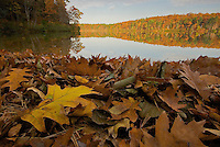 """Fall Splendor"".Autumn views at Walden Pond.  Fallen leaves on the shorline."
