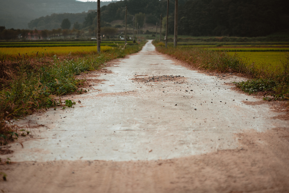 Rural road through the rice fields. Anseong, South Korea