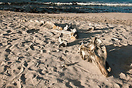 Landscape, bones on beach.<br />