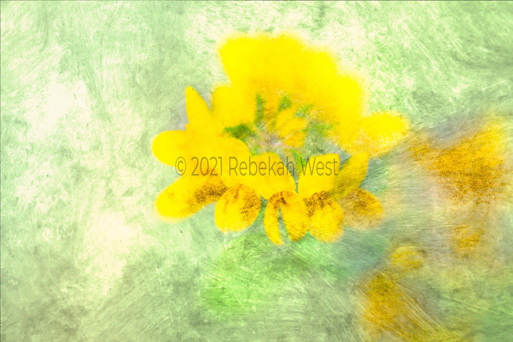 Circular bunch of yellow flowers sits centered in upper half of horizontal field, sienna petal details, gold accents in background field of green wash, greenery underlayers and overlayers, greenery, flower art, feminine, high resolution, licensing, iridescent, horizontal, 5616 x 3744