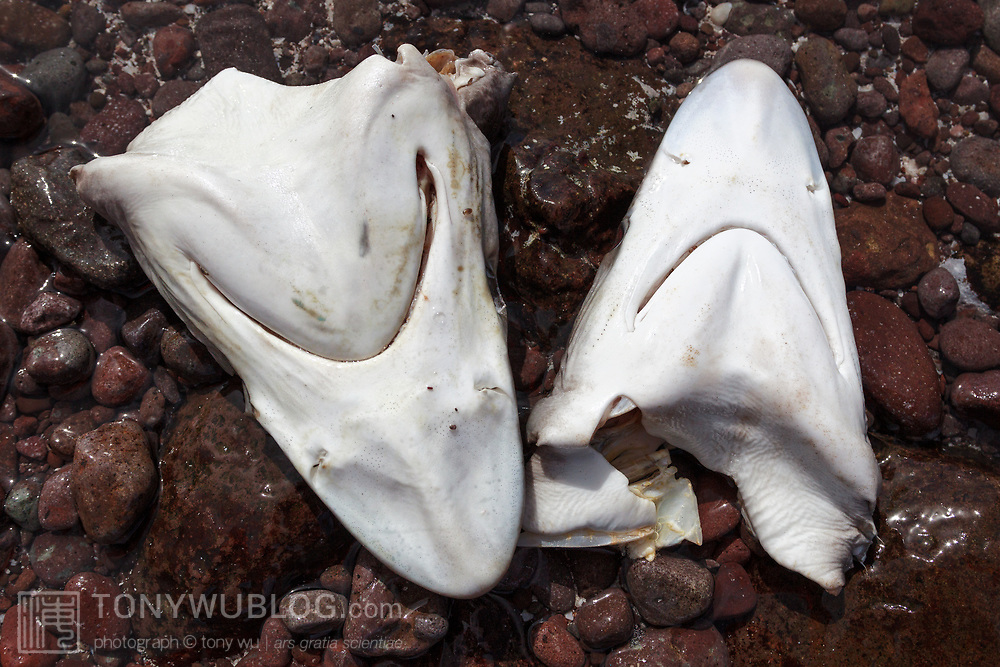Shark heads discarded by fishermen on the rocks of an island in the Sea of Cortez