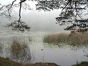 Dimmigt vid Söderbysjön