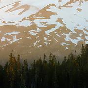 Sunset illuminating trees and slope of Mount Rainier - Mount Rainier National Park, WA