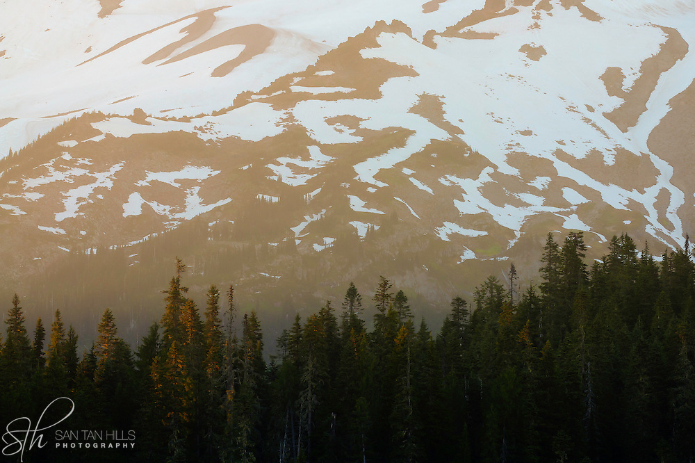 Sunset illuminating trees and slope of Mount Rainier - Mount Rainier National Park, WA
