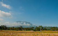 Golden rice fields below Mt. Agung in Eastern Bali, Indonesia