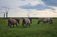 Horses on the shore of Bayou Pointe au Chien