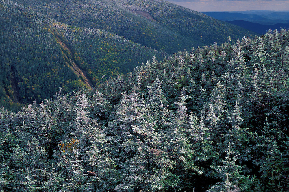 An early snow coats the boreal forest on New Hampshire's Mt. Lafayette. Franconia Ridge. White Mountains.  Greenleaf Hut, Mt. Lafayette, NH
