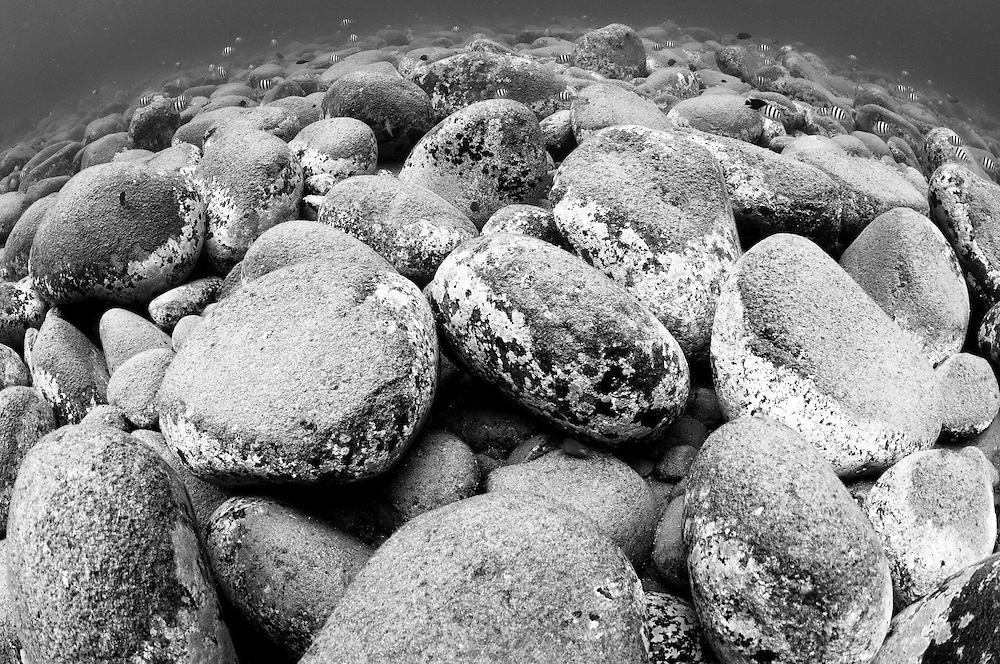 Black and white image of boulders and fish, taken underwater in a shallow bay on Ambon's south coast.