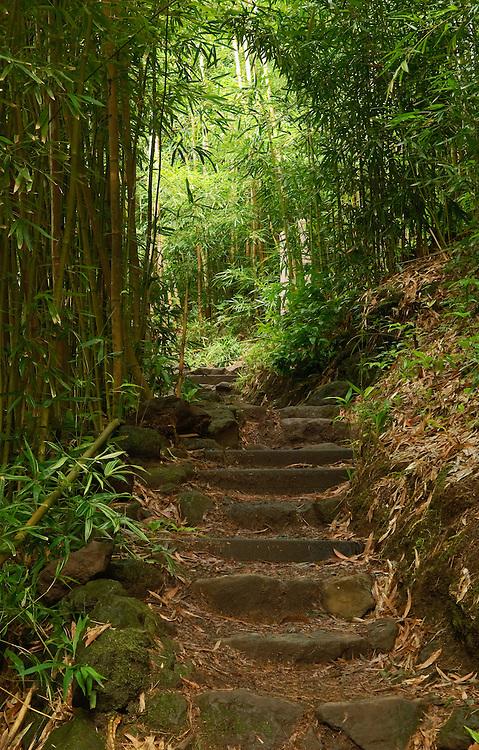 Pipiwai Trail, Haleakala National Park, Kipahulu District, Maui, Hawaii; steps in bamboo forest on way to Waimoku Falls.