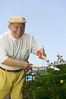 Senior Man Trimming Hedge