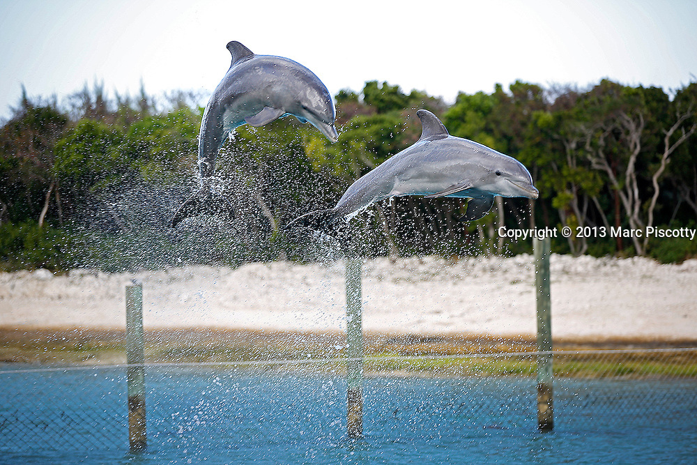 SHOT 12/10/13 8:13:55 AM - The Balmoral Island Day Beach and Dolphin and Stingray experience in Nassau, Bahamas. The luxurious island experience features four bars, an indoor food venue, a plunge pool, dolphin and stingray enclosures and a pristine white sand beach. (Photo by Marc Piscotty / © 2013)