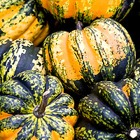 Orange and dark green acorn squash.