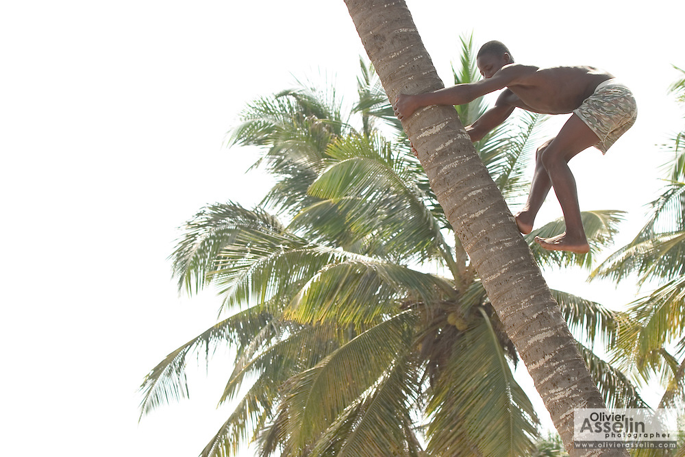 Boy climbing coconut tree