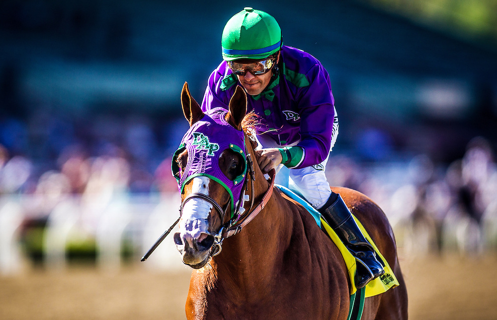 California Chrome, ridden by Victor Espinoza wins the San Felipe Stakes (G2) at Santa Anita Park on March 8, 2014 in Arcadia, California.  earned 50 points towards starting in the 2014 Kentucky Derby. (Photo by Evers/Eclipse Sportswire)