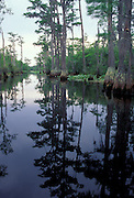 Water course with waterlillies and cypress trees in the Okefenokee Swamp National Wildlife Refge, Georgia. June 1999