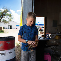 Garret Balok, 12, pettting his  bantam chicken named Nuggets, Friday, August, 31, 2018 at the Bi-County Fair in Prewitt. Balok will use Nuggets for Showmanship at the fair.