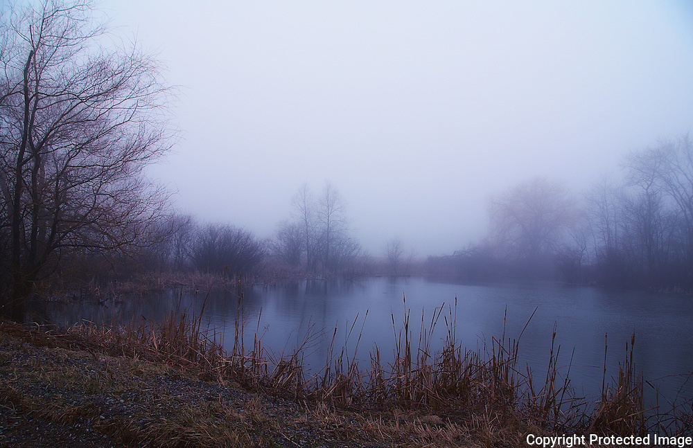 Mist over the Pond