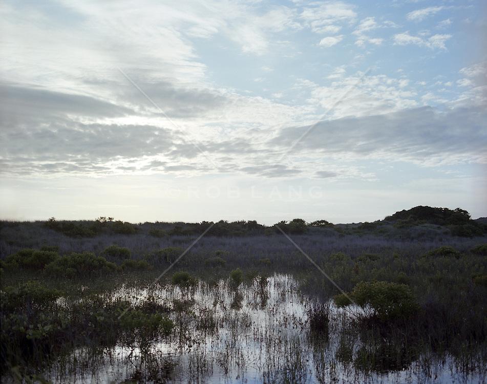 swampy area in the dunes of East Hampton