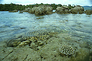 Coral near water surface at Iboh, Pulau Weh, Sumatra, Indonesia
