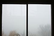trees in fog seen through a window