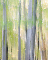 An experiment with abstract design on a group of trees in my back yard in the fall.