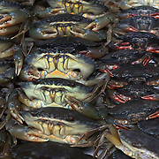 Crabs for sale at the fish market in Ho Chi Minh City, Vietnam. 3rd March 2012. Photo Tim Clayton
