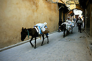 Morocco, Fez. Cars are nor allowed in the narrow streets of the medina in Fez, so donkeys are very popular way of transport.