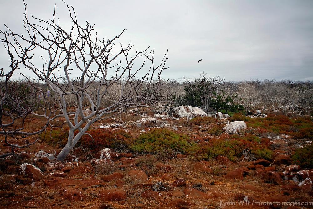South America, Ecuador, Galapagos Islands. Landscape of North Seymour Island.