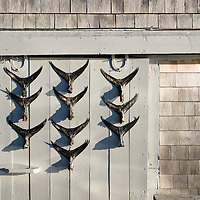 Rustic marina shack with fish tail dispay on door, Taylors Pond, Cape Cod, Massachusetts, USA