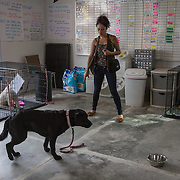 BOYDS, MD - SEP09: Heidy York, works with Kim, a service dog in training, at the Warrior Canine Connection in Boyds, Maryland.  (Photo by Evelyn Hockstein/For The Washington Post)Hei
