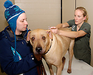 2011 - Montgomery County Animal Resource Center Vaccination Clinic
