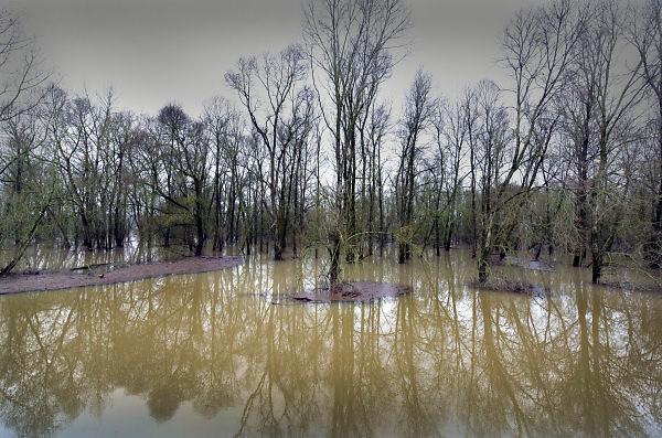 Nederland, Nijmegen, 12-1-2018 Het hoogwater, hoge water, trekt veel nieuwsgierigen en andere dagjesmensen naar de Ooijpolder en levert schilderachtige beelden op. Foto: Flip Franssen