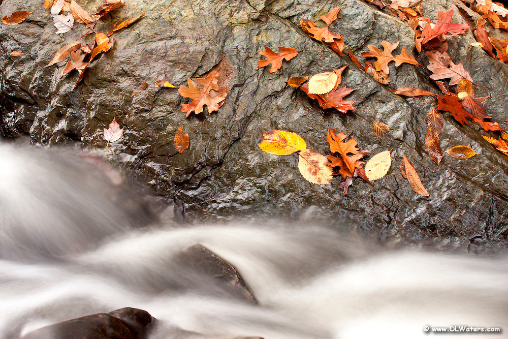 Stream flowing past  a rock covered with fall leaves.
