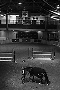 TORONTO, CANADA. A groom walks a horse in the horse palace at Exhibition Place. All the equine competitors at The Royal Horse Show are housed in the historical multilevel building. November 4 2016