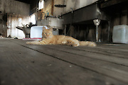 orange cat lying on wooden floor