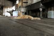 orange cat lying on wooden floor