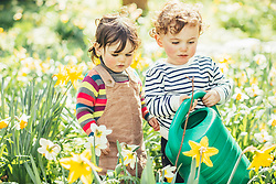 Boy and Girl Twins Watering Flowers in Garden