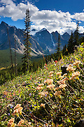 Summer wildflowers line a hillside overlooking the Valley of the Ten Peaks in Banff National Park, Alberta, Canada.