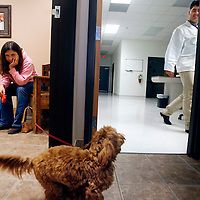 Wrigley, an eight month old cockapoo, wags it tail at Dr. Stephen Quenette, right, while Wrigley's owner, Sarah Lakoduk, left, keeps a close eye on Wrigley in the Diamond Q Animal Hospital during an office visit.