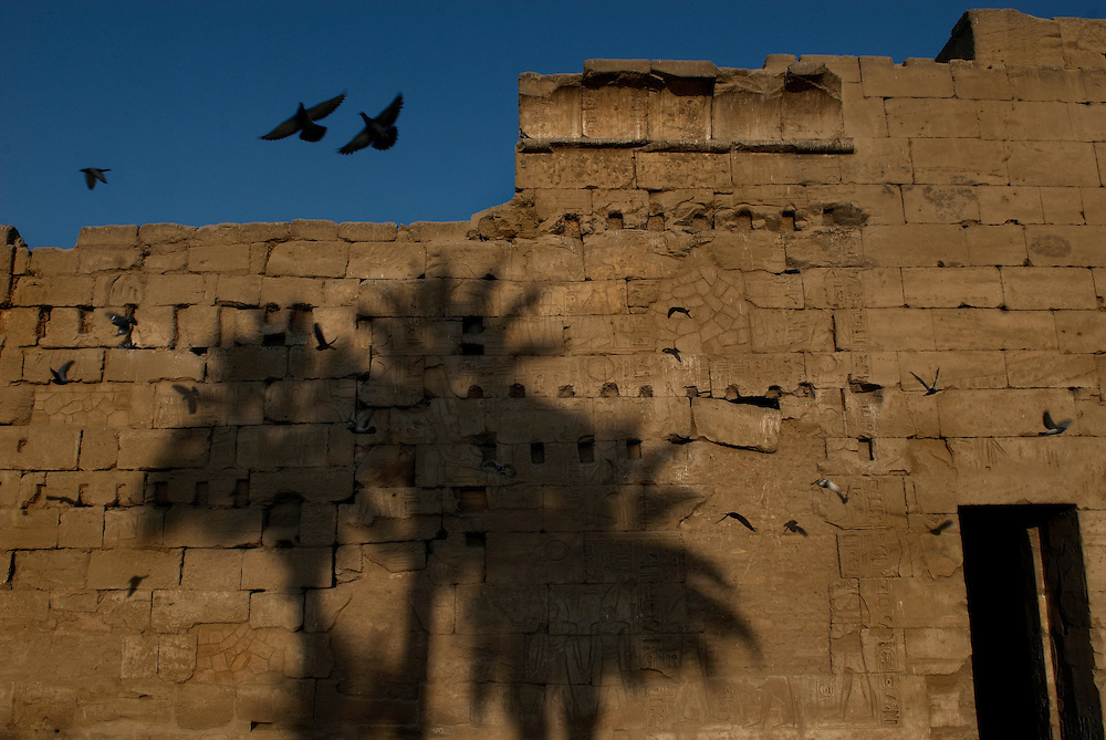 Egypt, Luxor. January/06/2009. Pigeons flying into roost at Luxor temple.