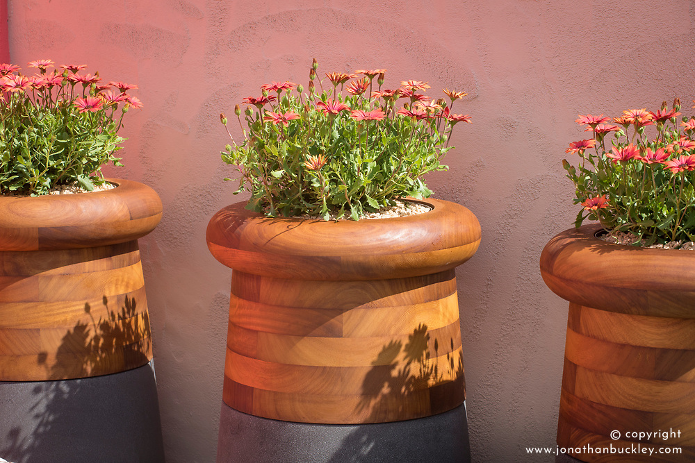 Osteospermum<br /> Beneath a Mexican Sky Garden<br /> RHS Chelsea Flower Show 2017<br /> Design: Manoj Malde<br /> Built by: Living Landscapes<br /> Sponsored by: Inland Homes PLC<br /> Photography &copy; Copyright Jonathan Buckley