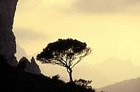 Formentor cap - Majorque island -Baleares -Spain