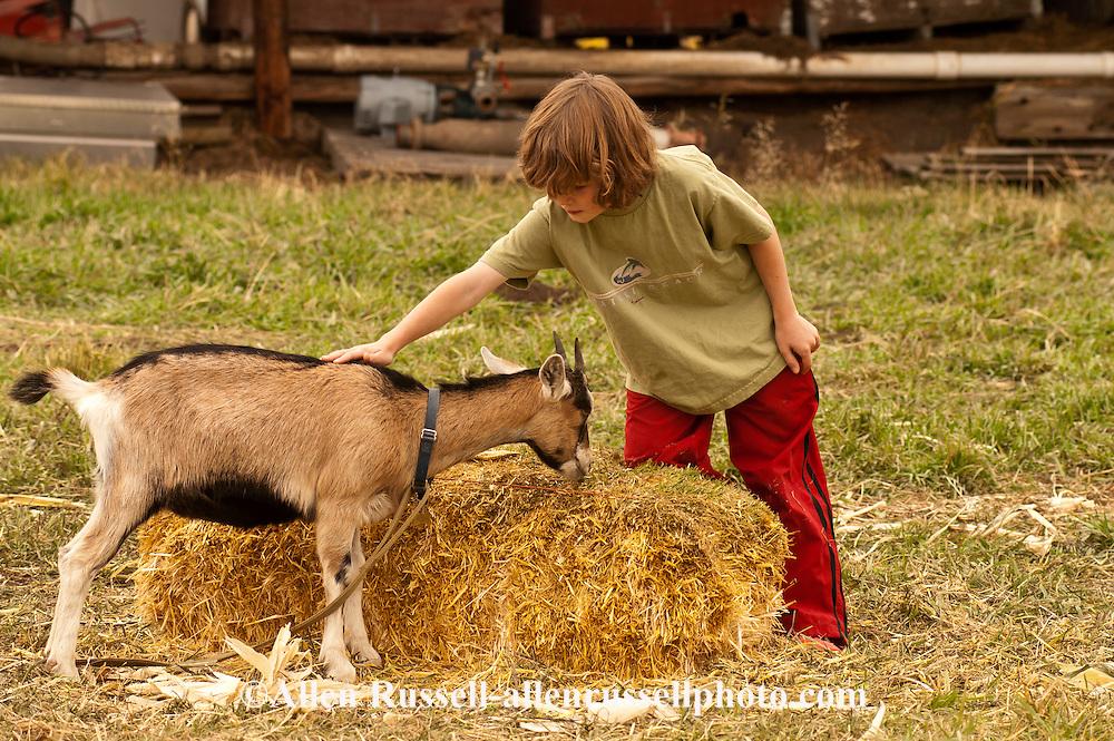 Boy, kids, pets goat, farm