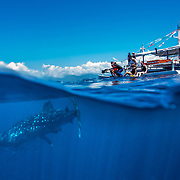 Over-under photo of whale shark (Rhincodon typus) below banca tour boat, Honda Bay, Palawan, the Philppines