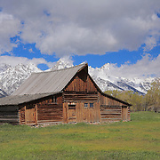 Mormon Row Bard - Grand Tetons, WY