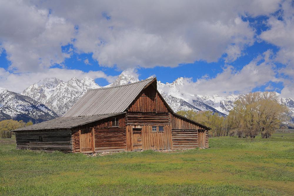 Mormon Row Bard - Grand Tetons, WY