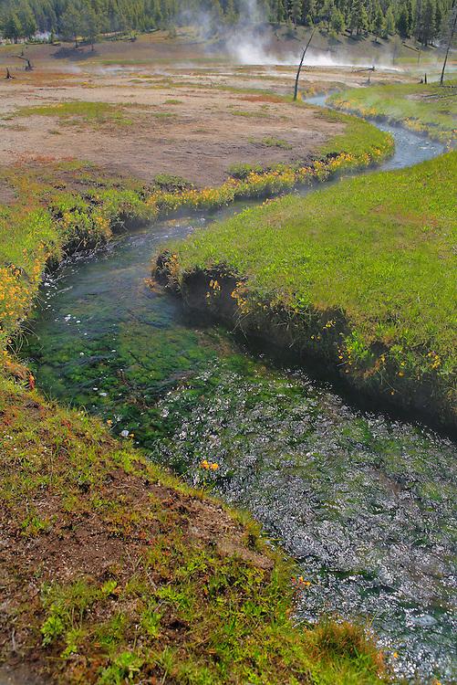 Geyser Pool Meadow Stream - Yellowstone National Park