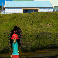 A hedge trimmed around a fire hydrant with the face of a lion in Stanley, East Falkland Island, Falkland Islands.