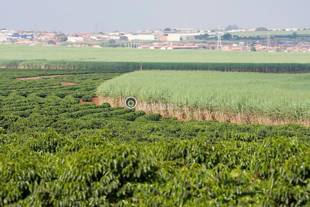 Plantacoes de cafe e cana de acucar as margens da Rodovia Deputado Amauri Barroso de Sousa (SP-304) proximo a area urbana./ Coffea plantation and sugarcane crops in Sao Paulo, Brazil.